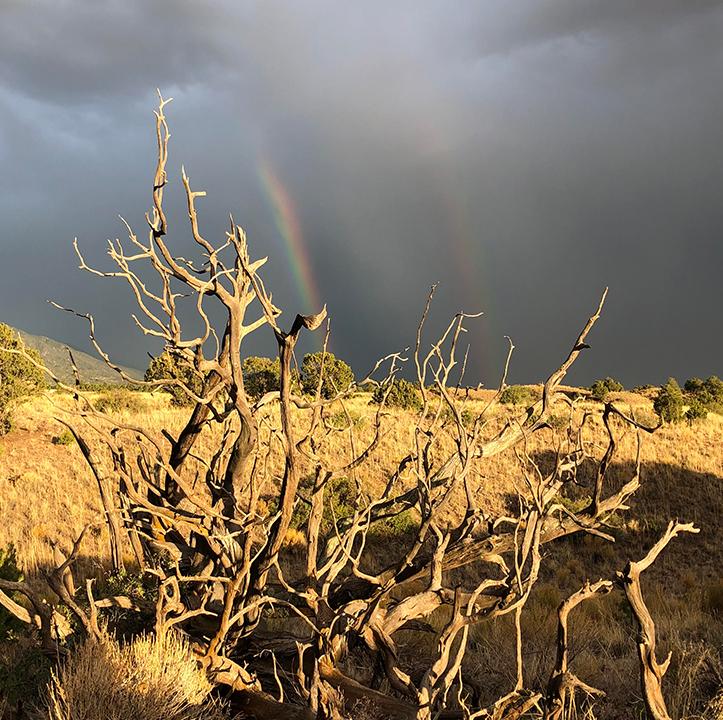 Driftwood and rainbow at Miyo Samten Ling